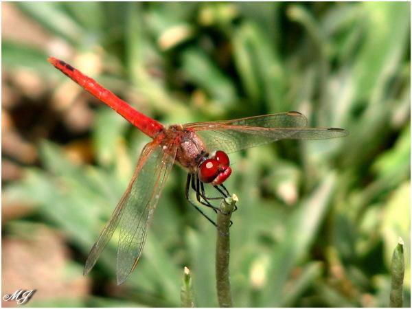 Dragonfly Damselfly Stationary