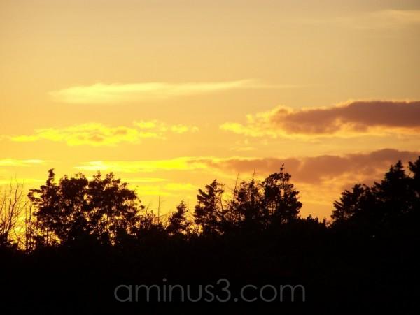 Golden Sun (2)