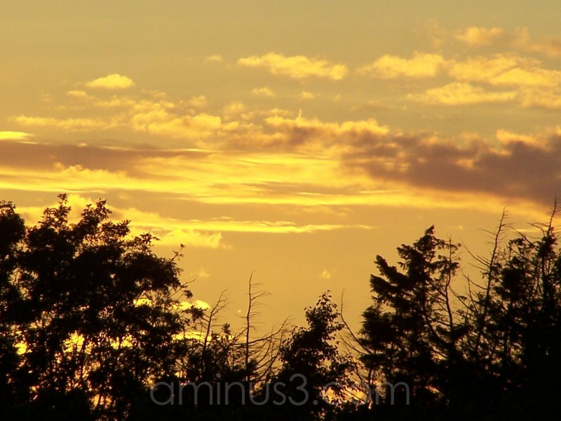Golden Sun (4)