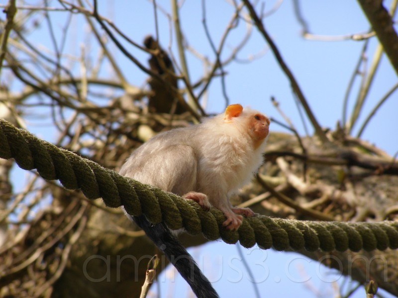 Monkey on the Wire