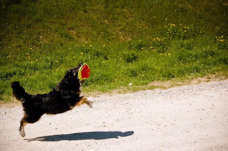 Frisbee Catch