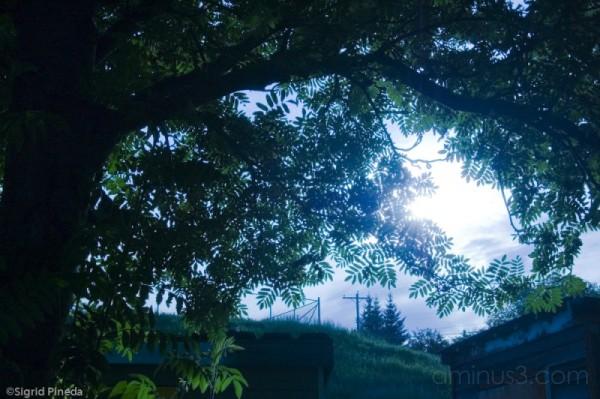 Sun shines through the leaves