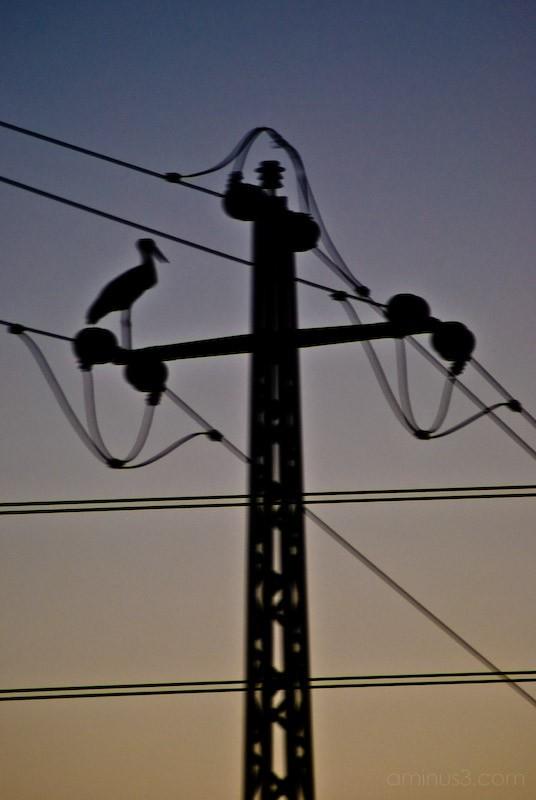 An electric stork :P