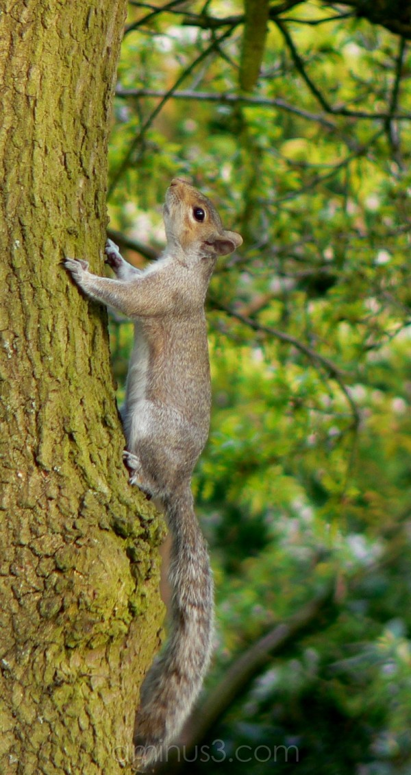 Acorns this way.....