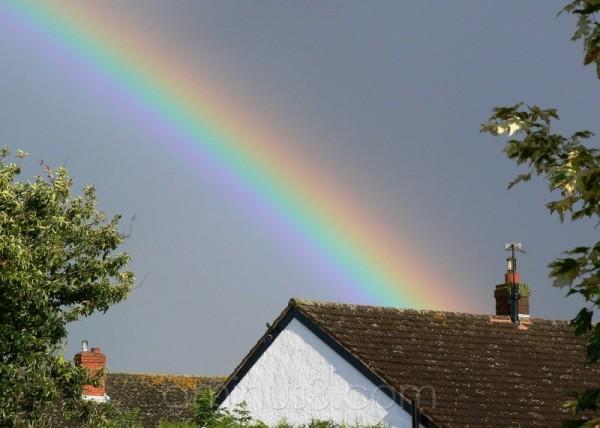 Rainbow delight.