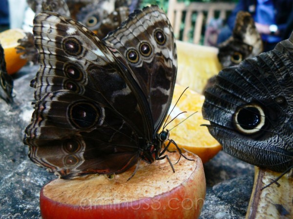 Butterflies, Wings and Yummy Things