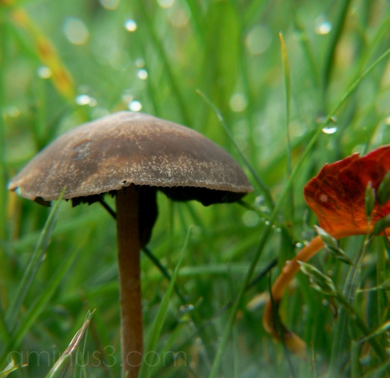 Amongst the grass & raindrops