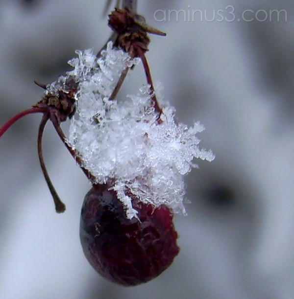 Snowflake and Berry 2