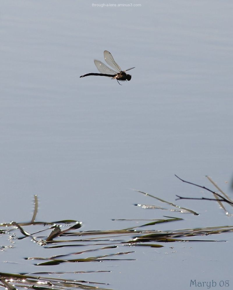Flying above the water.