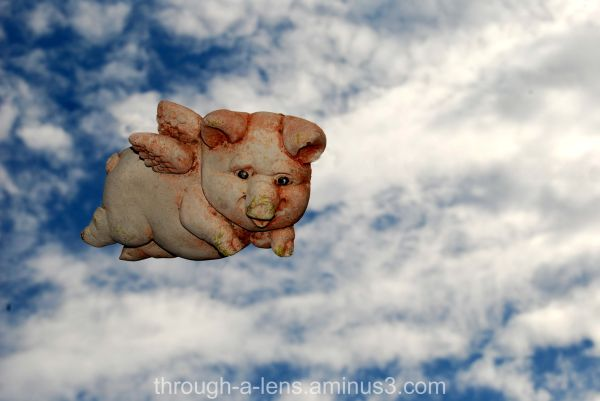 Silly Tuesday....Pigs do fly :)