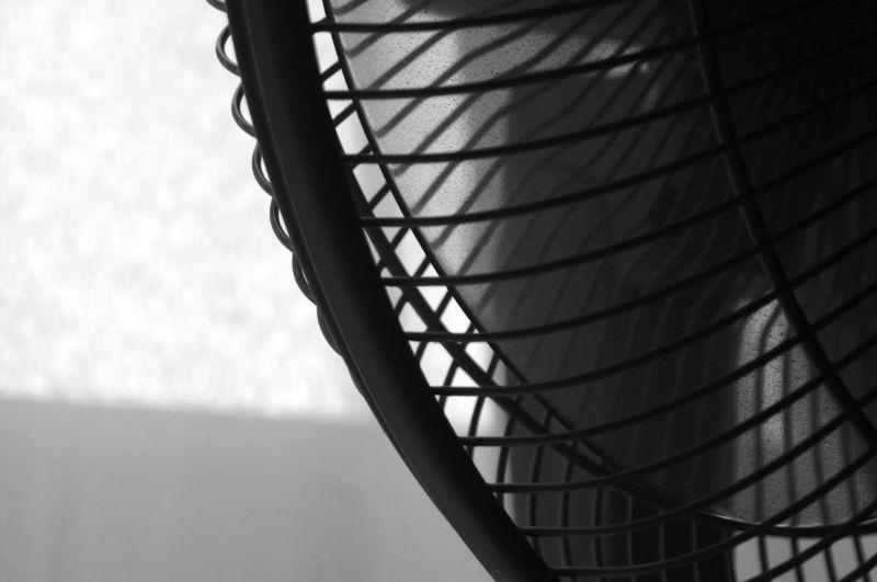 Fan, Photograph