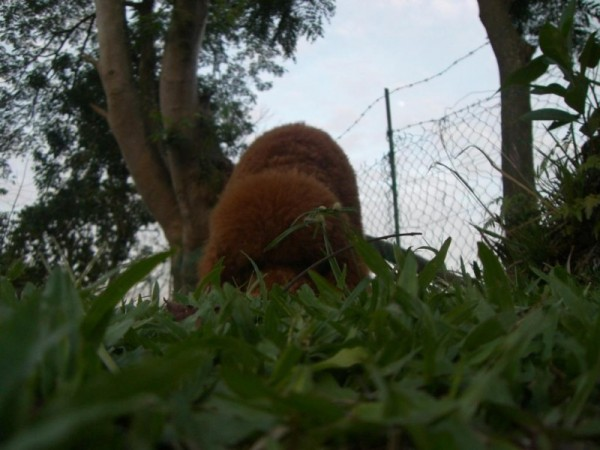 Sniffing Through The Grass