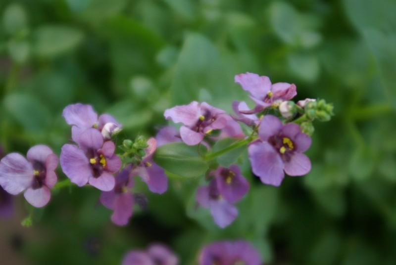 keiko's flowers