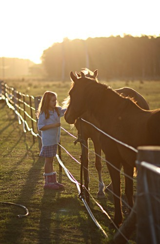 Child caring for horses at sunset