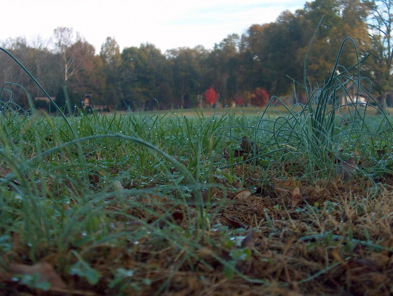 Dew on grass at Southside Park, Newton, NC