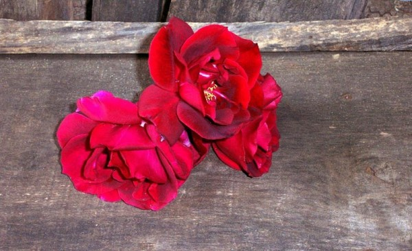 Red, Roses, Wooden, Newton, NC, Vickie Stacks