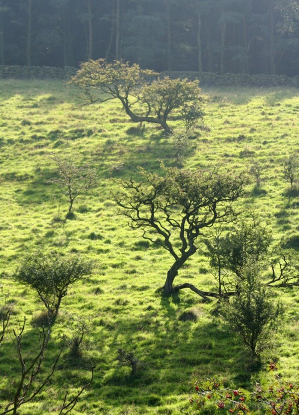 Trees on a hillside