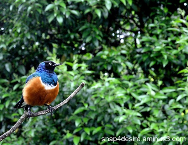 A colourful sweet bird