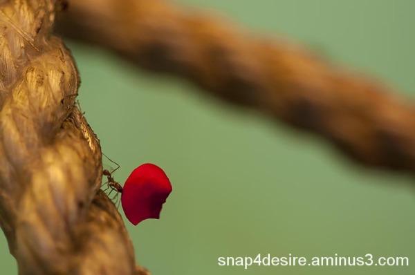 A Leaf Eater