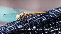 beautiful Big bug