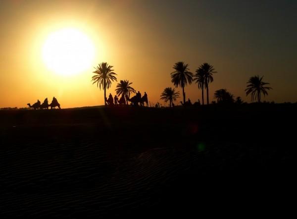 Kamel i solnedgang