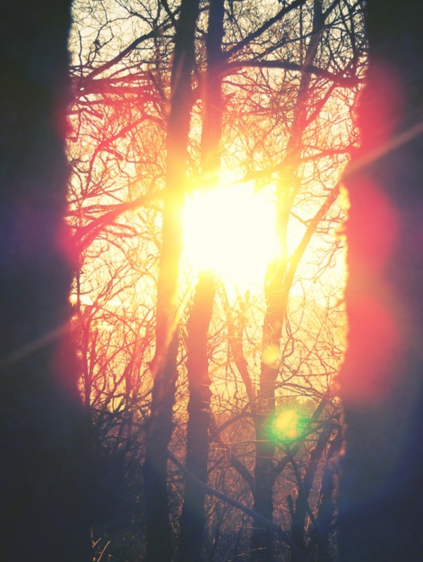 Sun, Trees