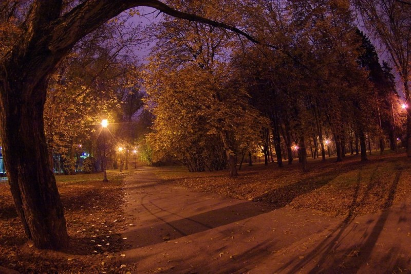 evening in park