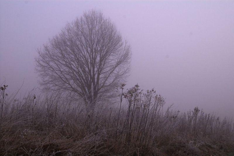 still foggy