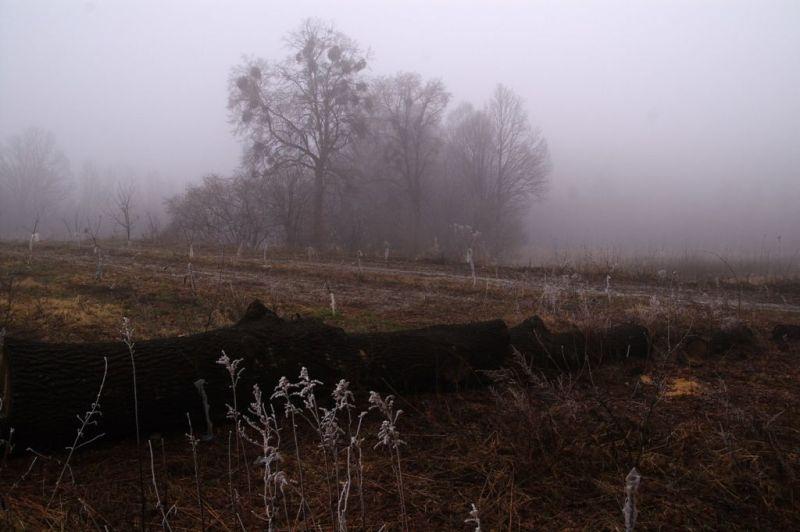 fields at Kazimierz