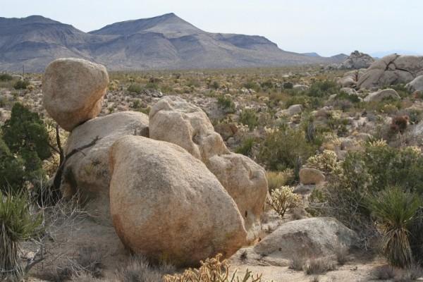 Mojave Desert National Preserve, CA