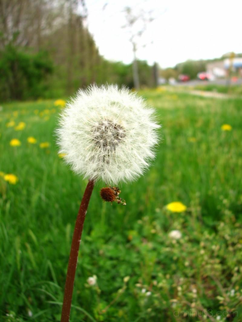 Wild Flower......