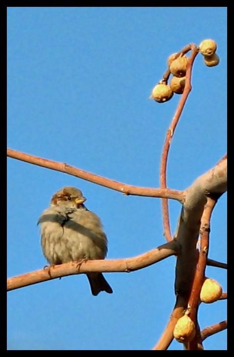 bird,alone