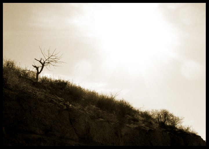singel,tree,sun