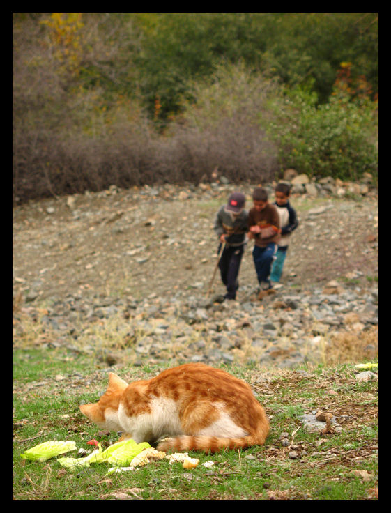 children,oshtobin,village,animal