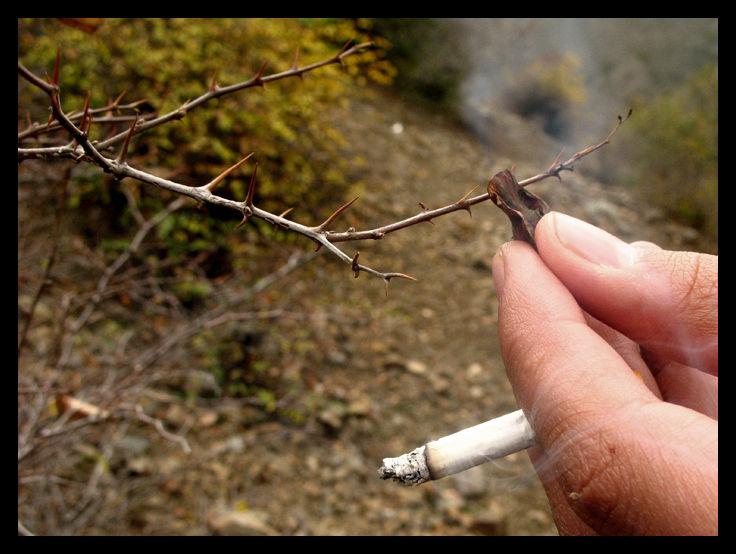 conceptual,sigaret,smoke