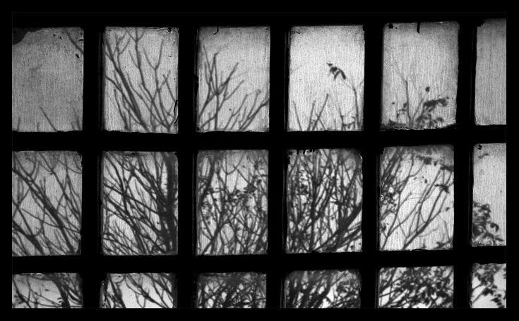 tree,window,abstract