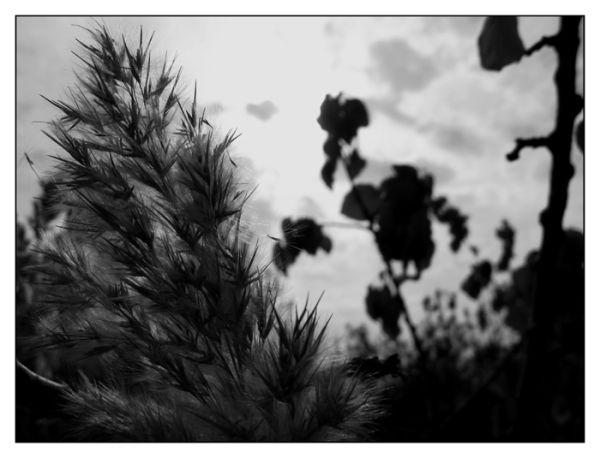 plants,nature