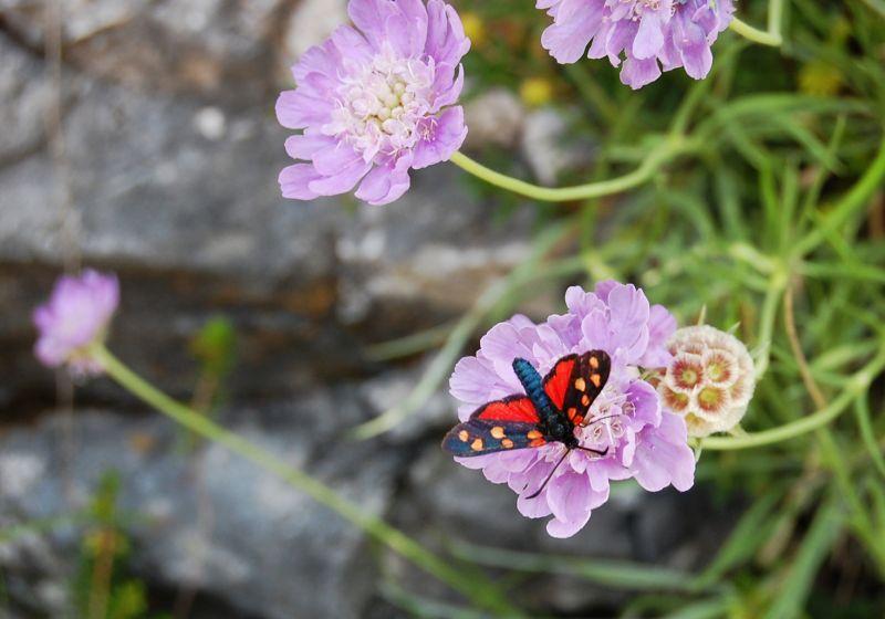 Farfalla in montagna