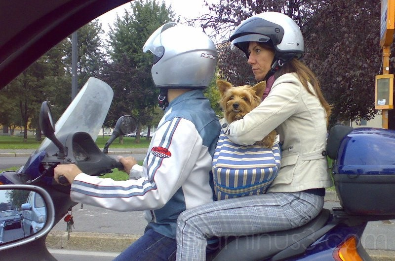 Nokia N73 - Dog motorbike