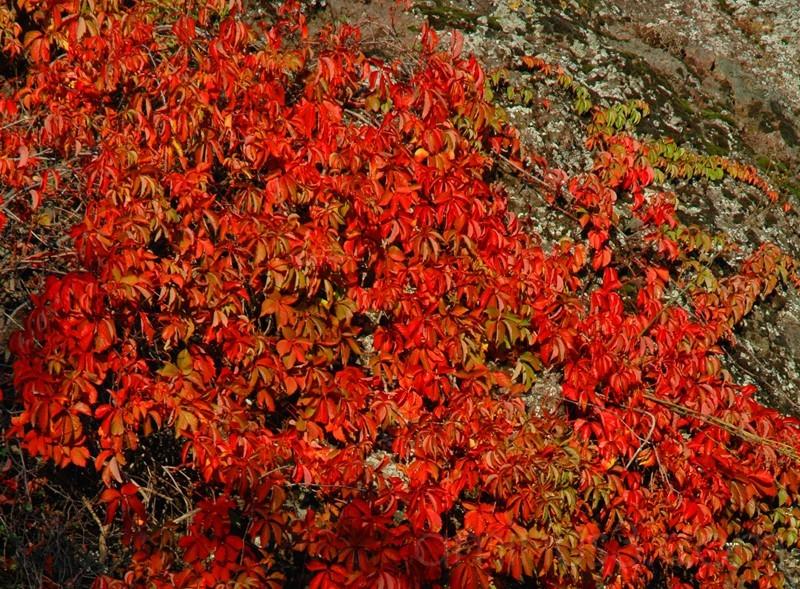 Autunno (autumn)