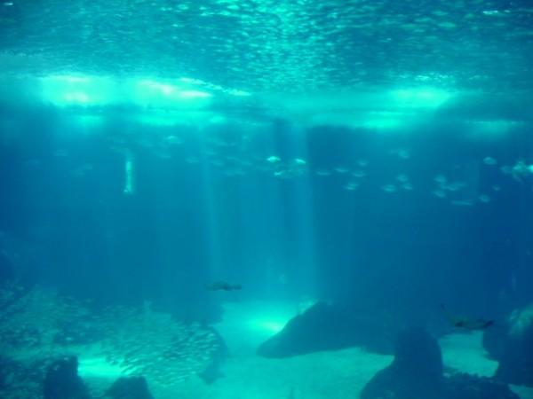 Oceanario