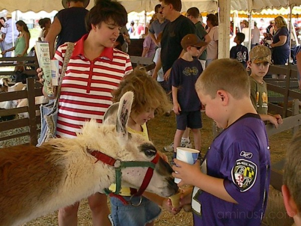 Feeding time at the petting Zoo
