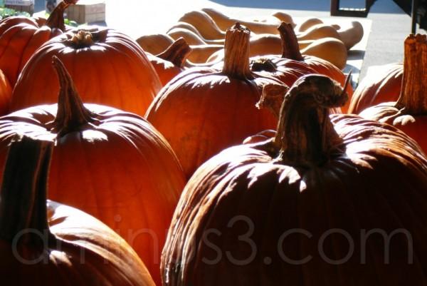 Harvest Time ...