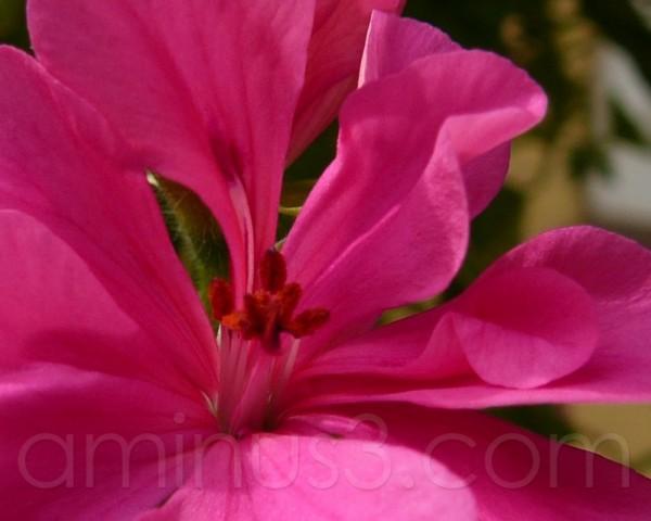 Inner Beauty ...