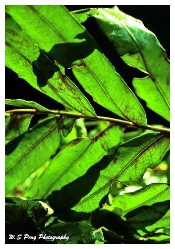 Green Leaf 3