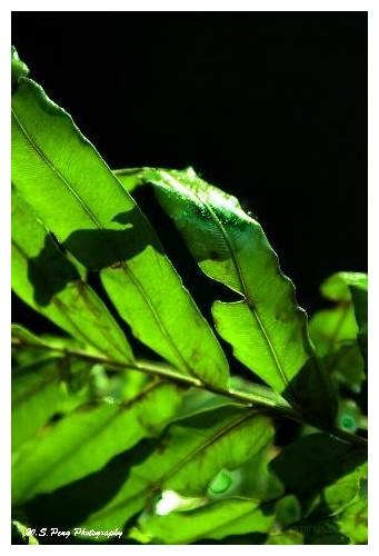 Green Leaf 4