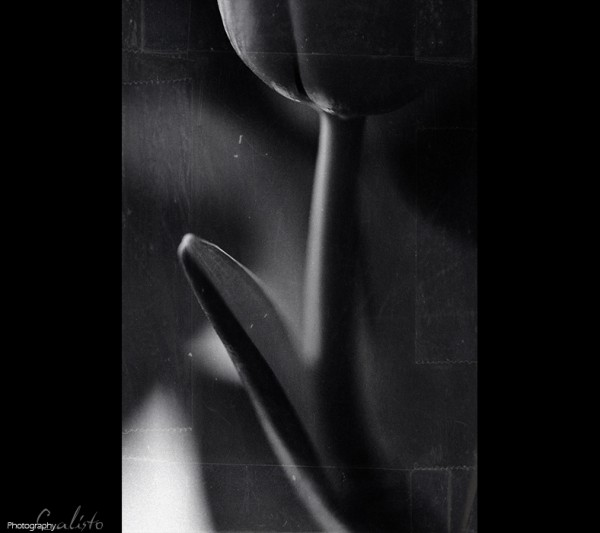 tulip, b/w, scratch, tapes, loneliness, darkness