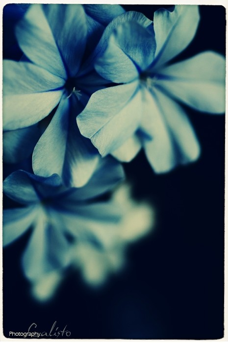 flower, blue, tomorrow, future, what I see