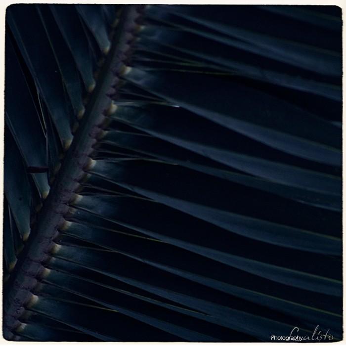 palm passion color leaf blue
