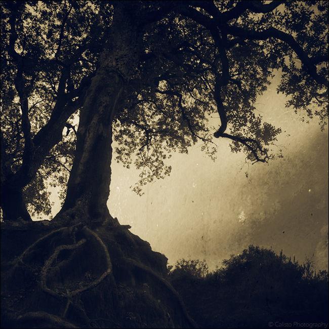 wish tree square dream
